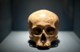 Human scull, Pre-Colombian Peru / Death @ Wellcome Collection